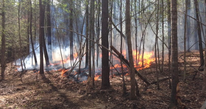 Prescribed Fire for Land & Wildlife Management