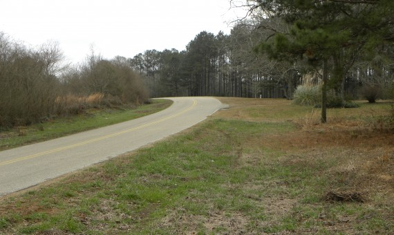 Hall Hunting and Timber Tract Property For Sale