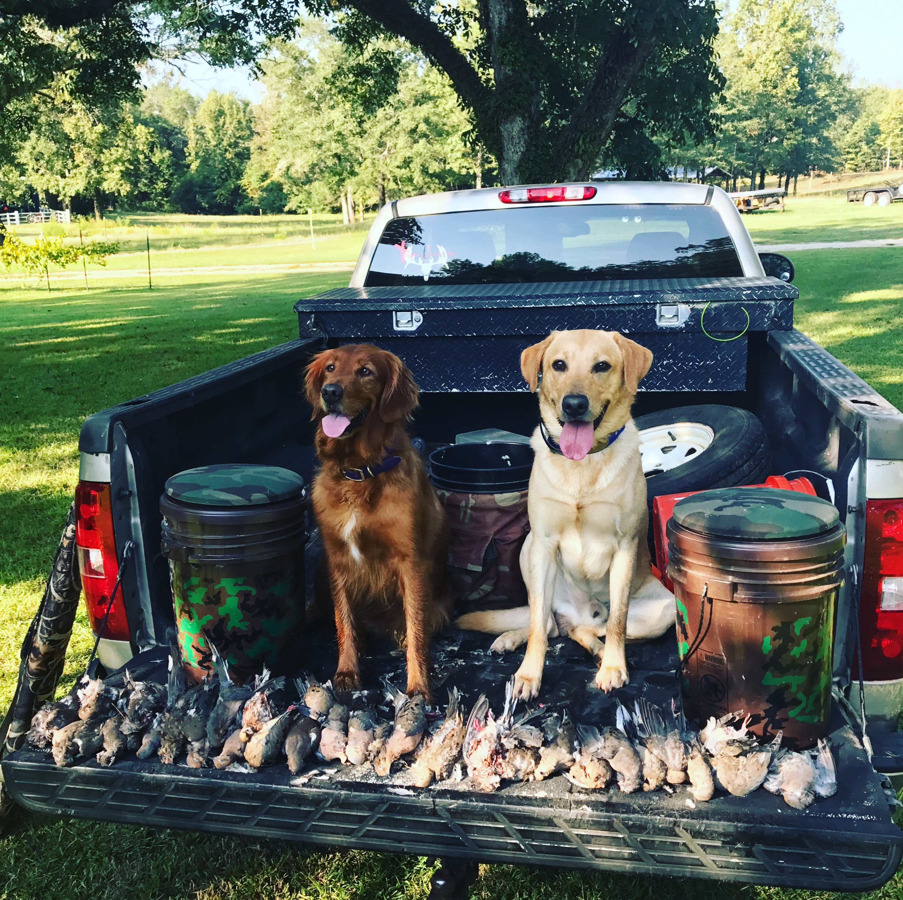 Alabama Dove Hunting – News, Seasons, & More!