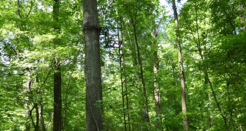 Staying SAFE in Tree Stands
