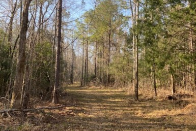 Cahaba Road Property For Sale