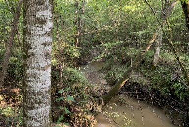 Pine HIll South Tract Land For Sale